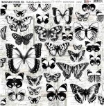 Transparent foil His&Hers 2 - Butterfly garden by Olga Heldwein 30x30x0,25 cm, matte black print , (1 sheet)