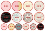 GN614 Classic Elegance Chipboard Buttons-14 (clr 70)