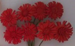 Daises (8 Piece set) Red (clr 50)